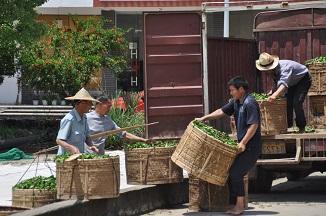 чайный рынок Китая